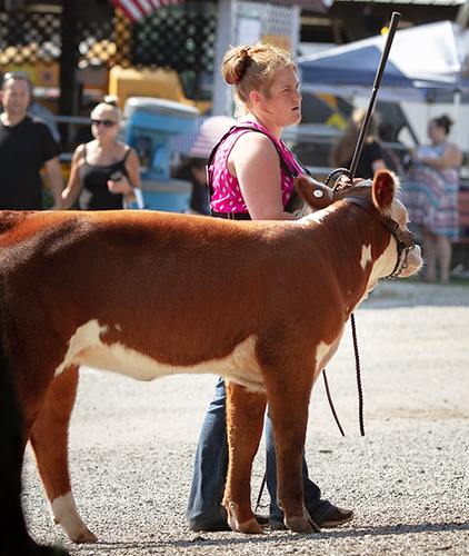 A girl showing her cow