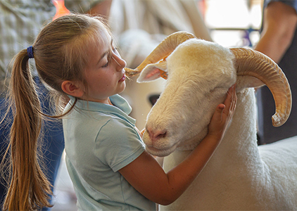 A girl with her sheep