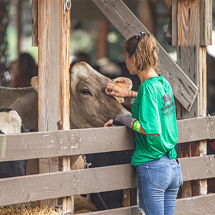 Girl petting a cow