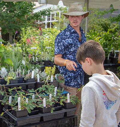 Boy looking at plants for sale